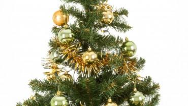 FESTIVALS-CMASTRAD-tree1